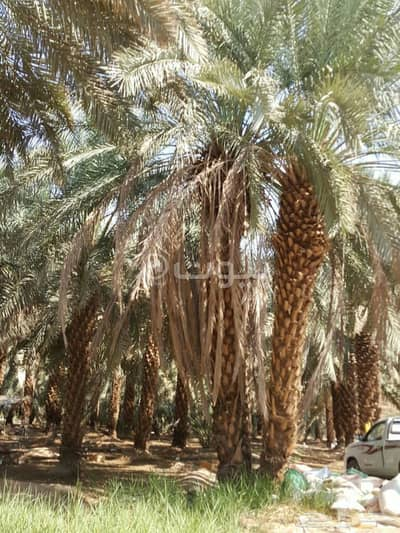 Farm for Sale in Madina, Al Madinah Region - Spacious Farm for Sale in Al Khalil, Madina