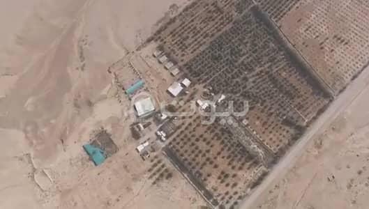 مزرعة  للبيع في الغاط، منطقة الرياض - مزرعة للبيع بالغاط، منطقة الرياض