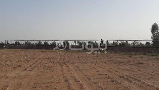 مزرعة  للبيع في المجمعة، منطقة الرياض - مزرعة للبيع في مخطط حمادة، المجمعة