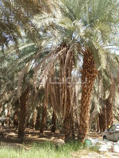 Farm for Sale in Madina, Al Madinah Region - Spacious Farm for Sale in Al Khalil, Madina