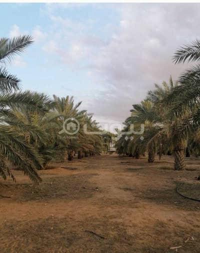 مزرعة  للبيع في ثادق، منطقة الرياض - مزرعة للبيع مع ملحق خارجي في محافظة ثادق