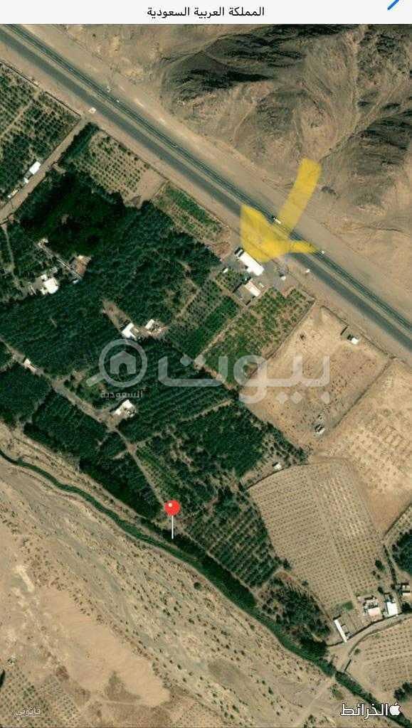 أرض زراعية للبيع في المدينة المنورة