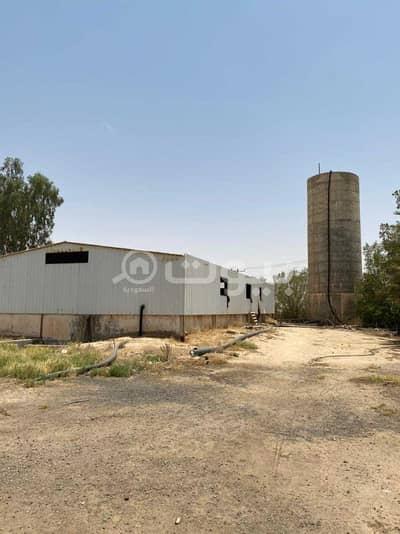مزرعة  للبيع في عنيزة، منطقة القصيم - مزرعة للبيع في حي شعيب، عنيزة