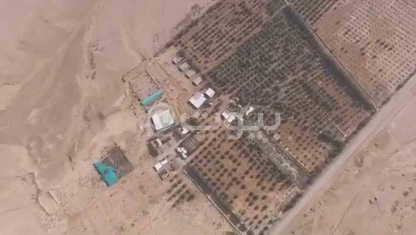 مزرعة للبيع بالغاط، منطقة الرياض