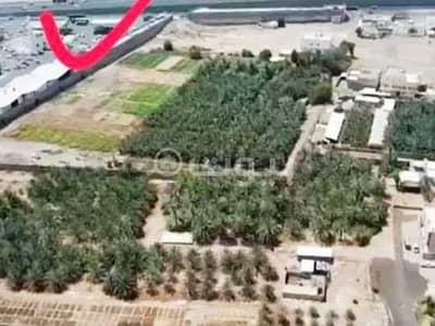Farm for Sale in Madina, Al Madinah Region - Farm for sale in Quba Madina