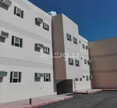 شقة 2 غرفة نوم للايجار في المدينة المنورة، منطقة المدينة - شقة عزاب للإيجار في الغابة، المدينة