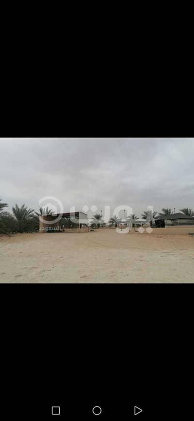 Farm for Sale in Buraydah, Al Qassim Region - A farm for sale on the same road as Saq Al-Fueliq, Buraydah