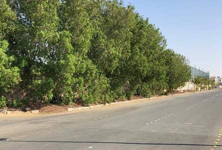ارض تجارية  للايجار في جدة، المنطقة الغربية - Photo