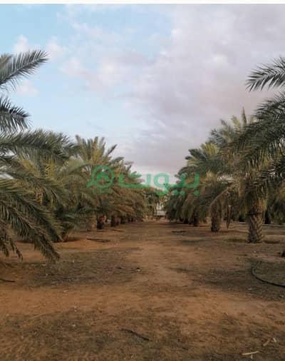 Farm for Sale in Thadiq, Riyadh Region - Farm for sale in Thadiq